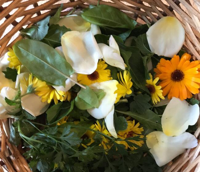Juliette, celle qui aimait les fleurs comestibles