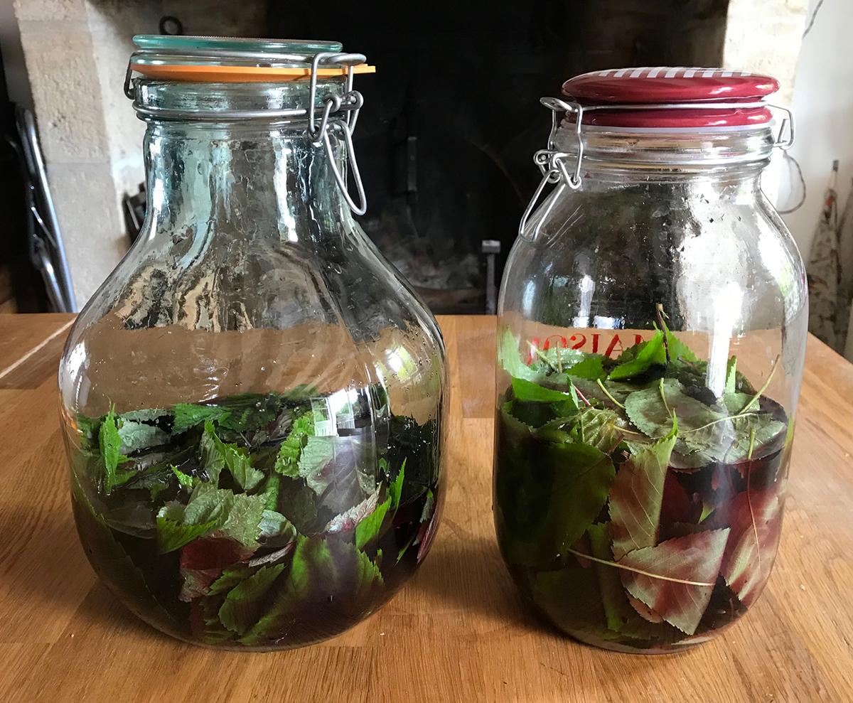Recette de vin de guignolet